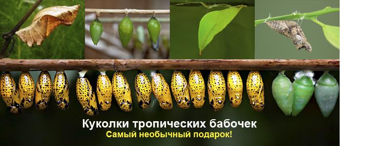 Набор для выращивания тропических бабочек 2